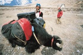 peli yak 280x186 - Peli: 20 Jahre in Europa