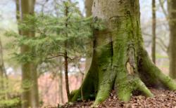 memo AG: Kooperation mit Bergwaldprojekt