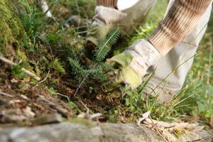 memo bergwaldprojekt2 - memo AG: Kooperation mit Bergwaldprojekt