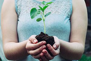 MAGNA Challenge Baum nurWeb - Magna sweets: Challenge für Klimaschutz