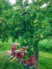 mank bienen - Mank: Engagement für Insekten